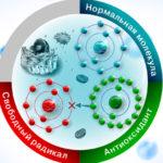 Антиоксиданты: что это, как действуют, применение, противопоказания